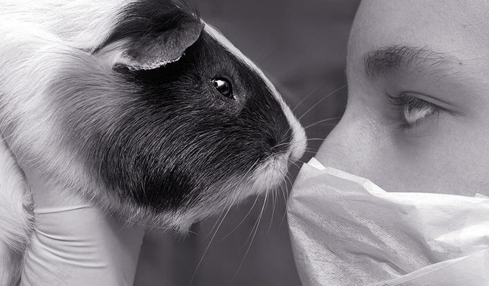 Tierversuche verringern und alternative Testmethoden entwickeln: Wo stehen wir in NRW?